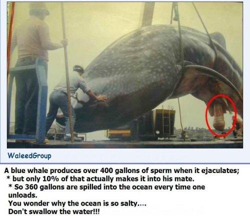 whale_sperm